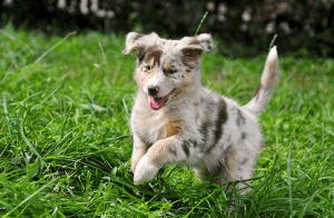 Animal Health Services for Pets, Scottsdale AZ