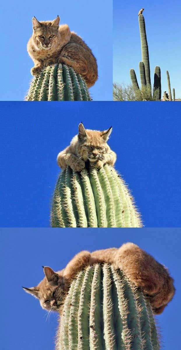 We shot that elusive Bobcat | Scottsdale Real Estate