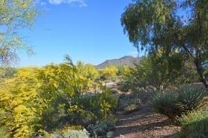 33176 N 72nd Pl Scottsdale, AZ 85266